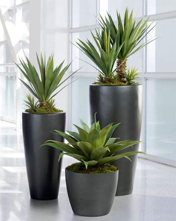 Vendita piante artificiali roma for Piante da interno