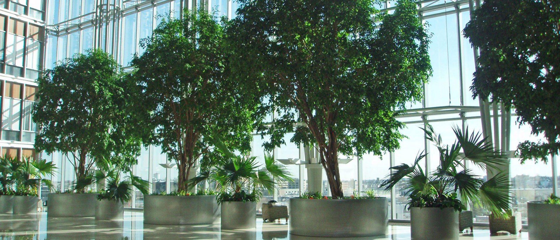 Noleggio piante roma idroservice - Piante per ufficio ...
