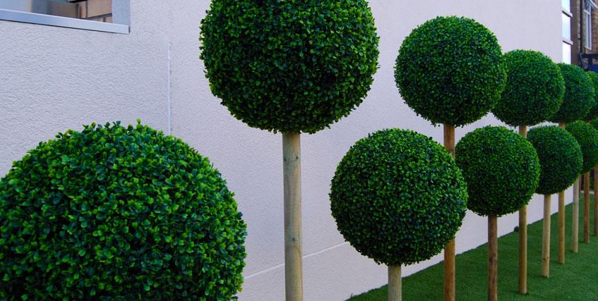 Artificiale piante viridium osmanthus artificiale h da for Piante da uva in vaso