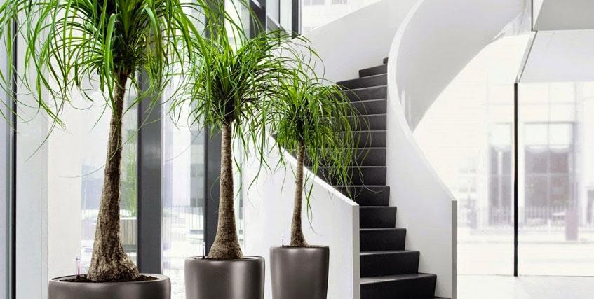 Vendita e noleggio piante per interni roma e per uffici - Piante da ufficio resistenti ...